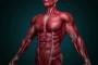 فیزیولوژی عصب و عضله شناگر